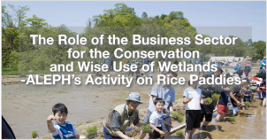 The Role of the Business Sector for the Conservation and Wise Use of Wetlands – Aleph's Activity on Rice Paddies